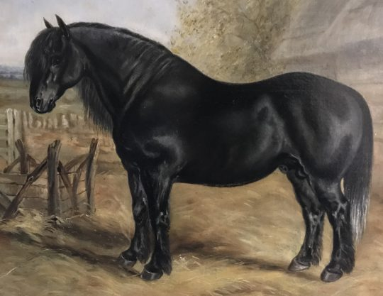 Oil painting of a Welsh Cob